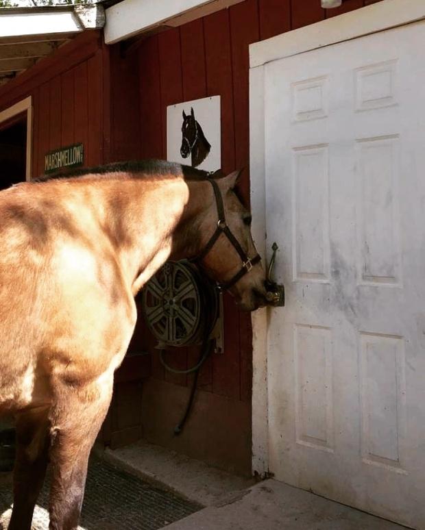 Barn Day
